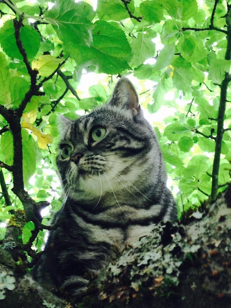 Molli im Baum